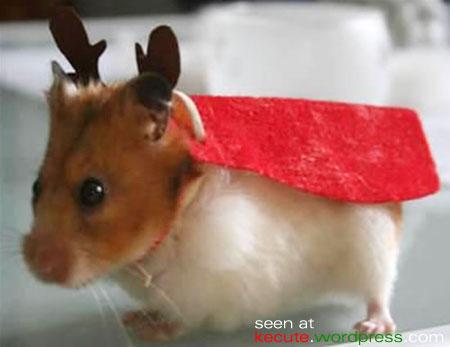 christmas-hamster-1.jpg